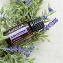 doTERRA Pure Essential Oil - Lavender Lavandula angustifolia